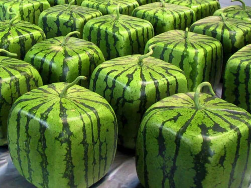 Square_watermelon Most Expensive Watermelons