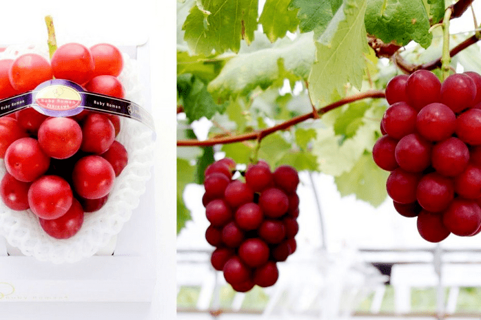 Ruby Roman Grapes - Most Expensive Grapes