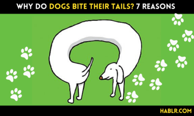 why do dogs bite their tails