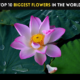 Top 10 Biggest Flowers in the World