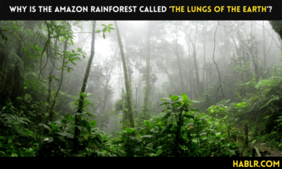 the lungs of the earth