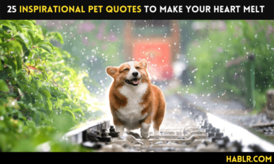 25 Inspirational Pet Quotes to Make Your Heart Melt